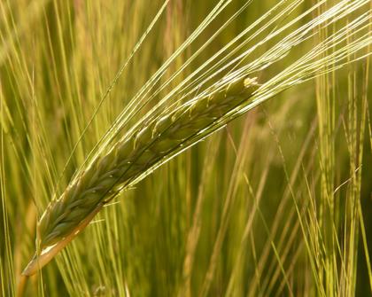 La política agrícola europea y su impacto en la región