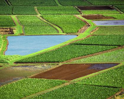 Videos exclusivos sobre acuerdos multilaterales y negociaciones agrícolas