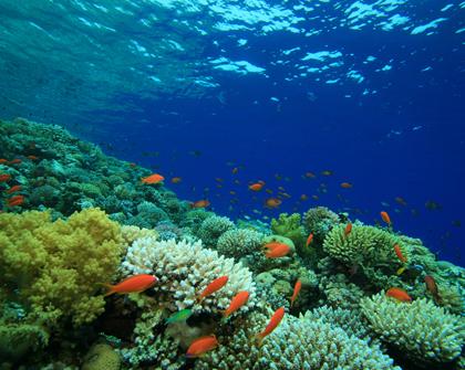 ONU propone proteger la biodiversidad marina