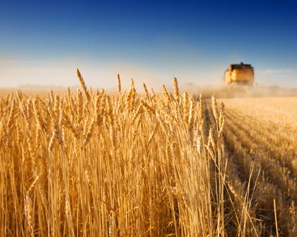 Oportunidades de comercio agrícola para el MERCOSUR