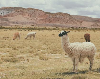 Bolivia analiza alternativas de zonas