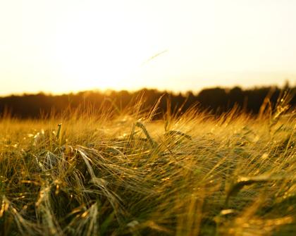 Unión Europea y Brasil piden nuevas normas de la OMC sobre subsidios agrícolas
