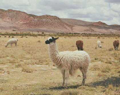Aduanas de Chile y Bolivia coordinan protocolos para potenciar la gestión integrada de fronteras