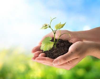 T-20: Cambio climático, empleo y agricultura sustentable