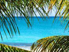 Caribe debate acerca de calidad y estándares comerciales