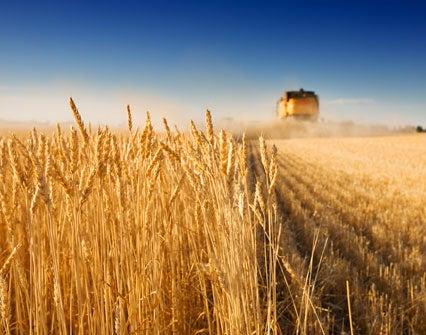 México avanza en comercio agroalimentario con Brasil