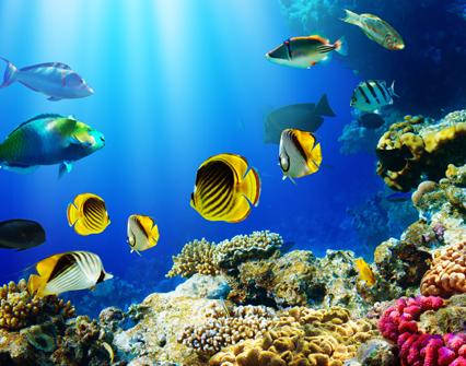 Costa Rica analiza estrategia de economía y comercio para sector pesquero
