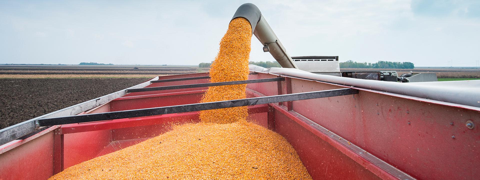 Efecto neutro de los precios de commodities en el comercio exterior
